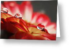 Macro Drops Greeting Card