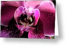 Macro Magenta Orchid Greeting Card