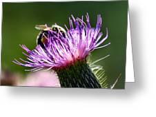 Macro Micro Bee Greeting Card