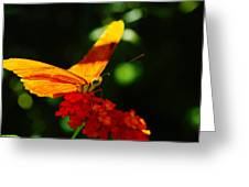 Macro Of An Orange Butterfly Greeting Card