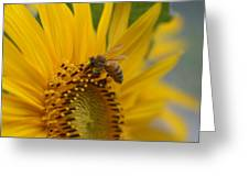 Macro Of Bee On Sunflower...   # Greeting Card