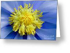 Macro Photograph Of  Blue Waterlily Greeting Card
