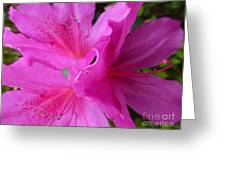 Macro Purple Azalea Flower Greeting Card