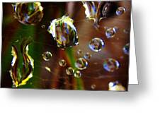 Macro Rain Greeting Card