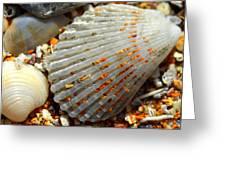 Macro Shell On Sand 4 Greeting Card by Riad Belhimer