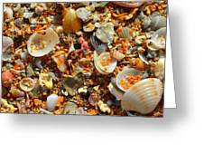 Macro Shells On Sand3 Greeting Card