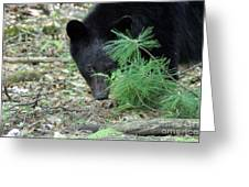 Mad Bear Greeting Card