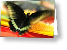 Madame Butterfly. Impressionism Greeting Card