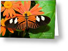 Madeira Butterfly Greeting Card