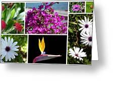 Madeiran Flower Collage Greeting Card