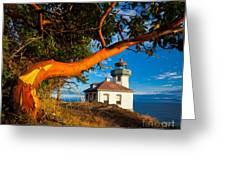 Madrone And Lighthouse Greeting Card