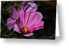 Magenta Cosmos 2 Greeting Card