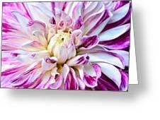 Magenta Dahlia Greeting Card