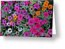 Magenta Daisies Greeting Card