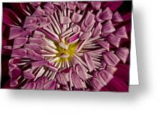 Magenta Greeting Card