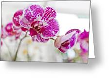 Magenta Ears Orchid Greeting Card