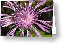 Magenta Fireworks Greeting Card