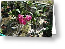 Magenta Orchid Greeting Card