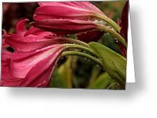 Magenta Rain Greeting Card