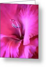 Magenta Splendor Gladiola Flower Greeting Card by Jennie Marie Schell