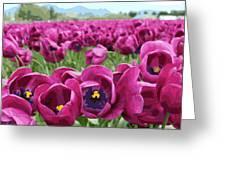 Magenta Tulips Greeting Card