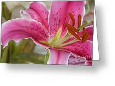Magenta Tiger Lily Greeting Card