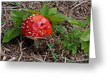 Magic Mushroom Greeting Card