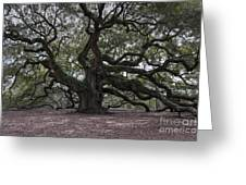 Magical Angel Oak Greeting Card