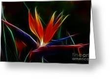 Magical Bird Of Paradise Greeting Card