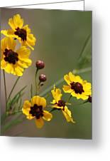 Magical Coreopsis Tinctoria Wildflowers Greeting Card