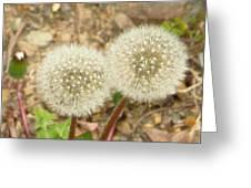 Magical Dandelion Greeting Card