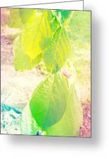 Magical Leaves Greeting Card