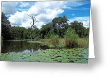 Magical Lily Pond Greeting Card