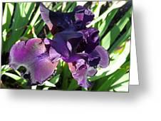 Magical Purple Iridescent  Iris Greeting Card