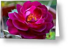 Magical Rose Greeting Card