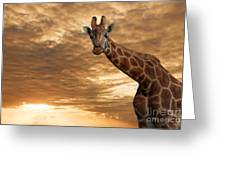 Magical Savanna Greeting Card by Pete Reynolds