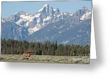Magnificent Elk Greeting Card