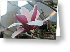 Magnificent Magnolia Blossom Greeting Card