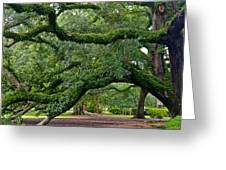 Magnificent Oak Alley Tree Greeting Card