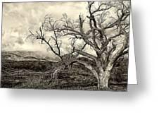 Magnificent Shoe Tree Near San Felipe Road Greeting Card