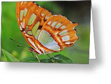 Magnificently Majestic Malachite Greeting Card