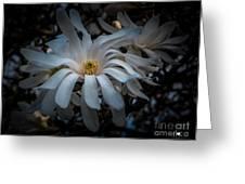 Magnoila Tree Blossum Greeting Card