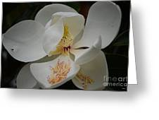 Magnolia 14-3 Greeting Card