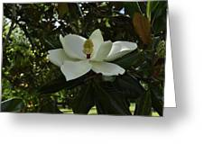 Magnolia 3 Greeting Card
