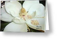 Magnolia Love Greeting Card