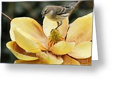 Magnolia And Warbler Photo Greeting Card