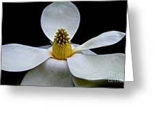Magnolia Beauty Greeting Card