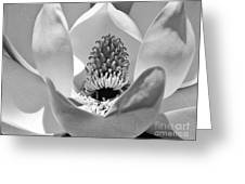 Magnolia Bloom 3bw Greeting Card