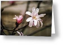 Magnolia Blooms Greeting Card