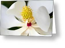 Magnolia Blossom 1 Greeting Card
